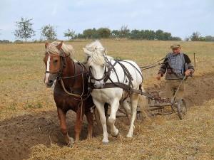farmer-plowing